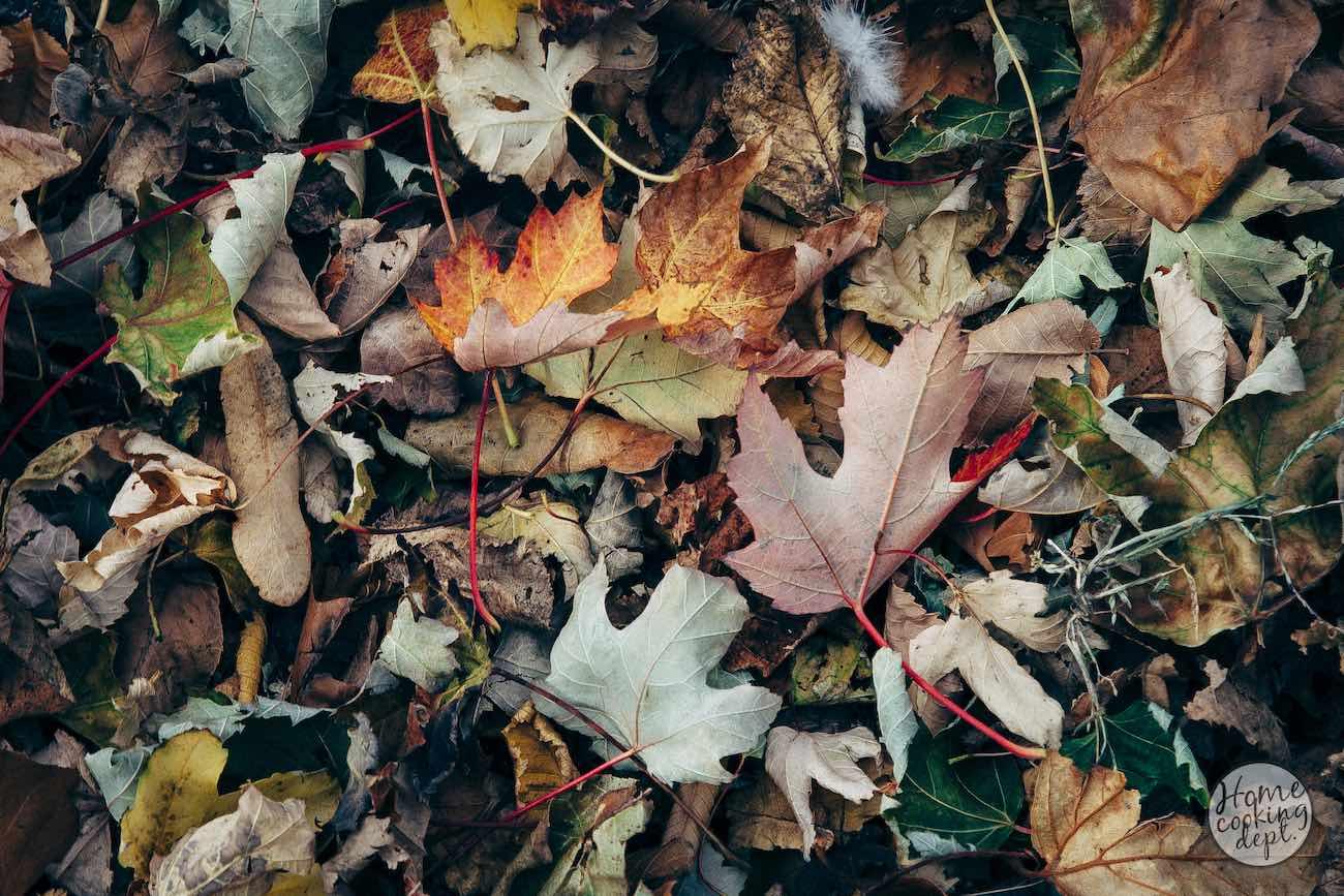 Autumn-story-III-0684-2E.jpg