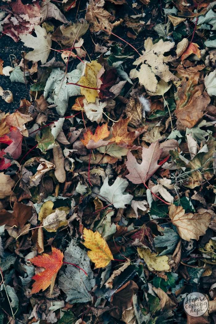 Autumn-story-III-0684E.jpg