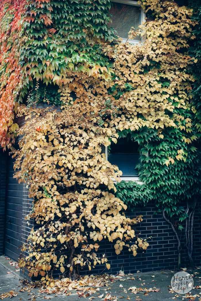 fall-story-2-0758E.jpg